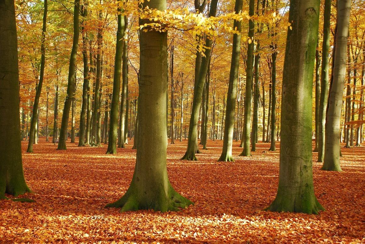 Afbeeldingsresultaat voor bos activiteiten peuters