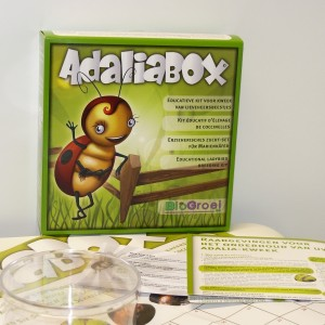 Adaliabox_1