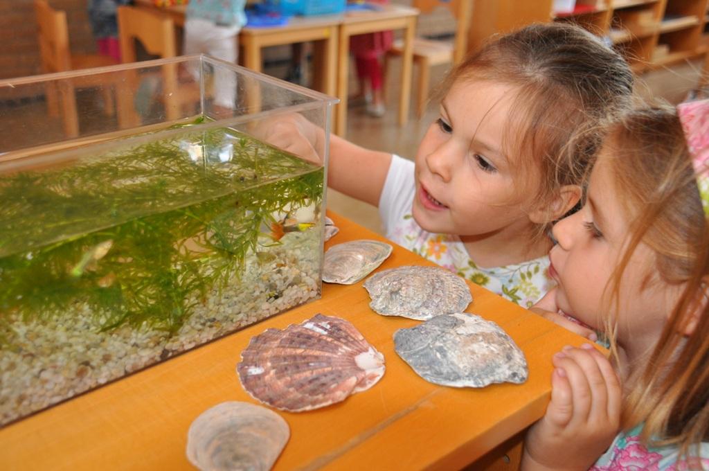 Kleurplaten Van Onderwaterdieren.Jufjanneke Nl De Mooiste Vis Van De Zee