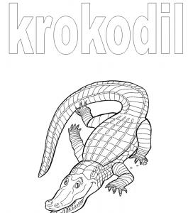 Werkboekje krokodil